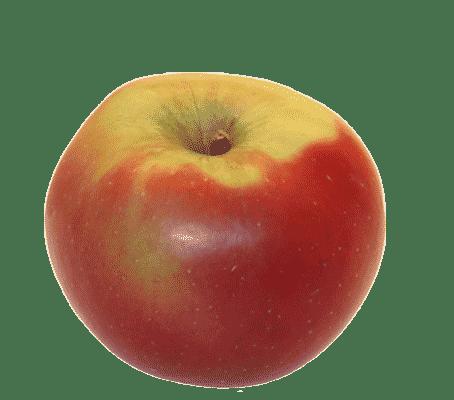 kronprinz-rudolf
